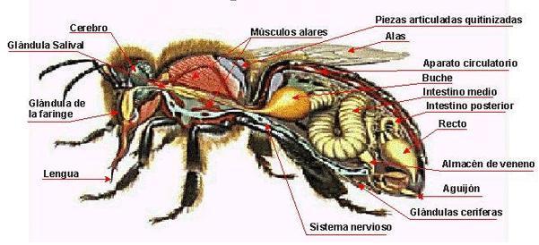Insectos – Educación para la vida
